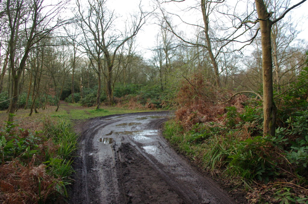 The track to Warren Wood Site - Follow the track round in to the car parking area.