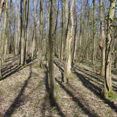 General view of the woodland.